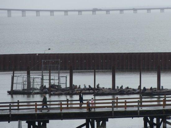 Hampton Inn & Suites Astoria: View of sea lion pier from hotel