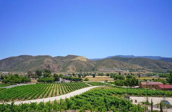 Temecula, CA: Fazeli Cellar Views