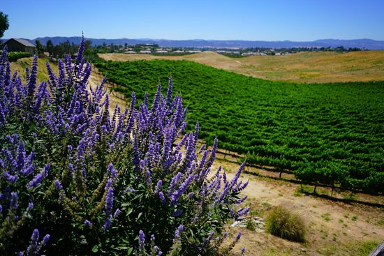 Temecula Vineyards