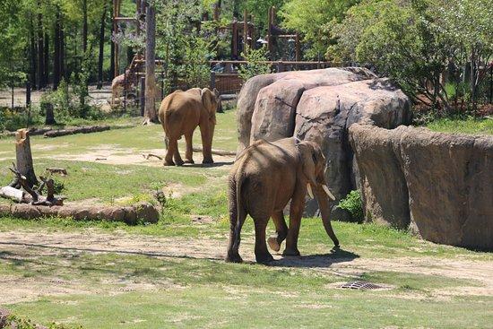 Birmingham Zoo: Elephants