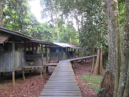 Sandakan Division, Malaysia: Jungle huts