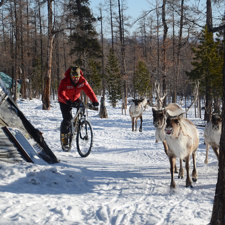 Mongolia Expeditions: Winter biking tour in Taiga forest, Northern Mongolia