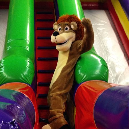 Weston, Φλόριντα: Here is the Little Java's Lion ready to race his friends down the slide!