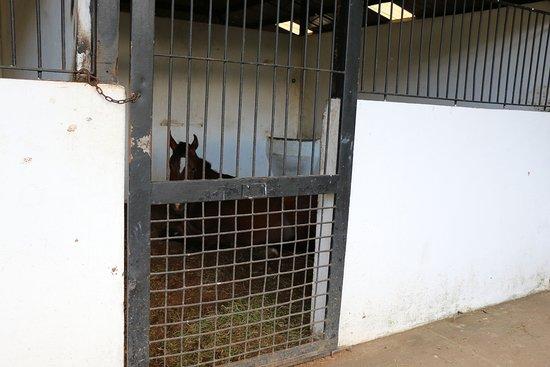 Haras Cerro Punta: horse facilities