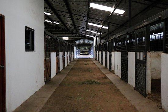 Cerro Punta, Panamá: horse facilities