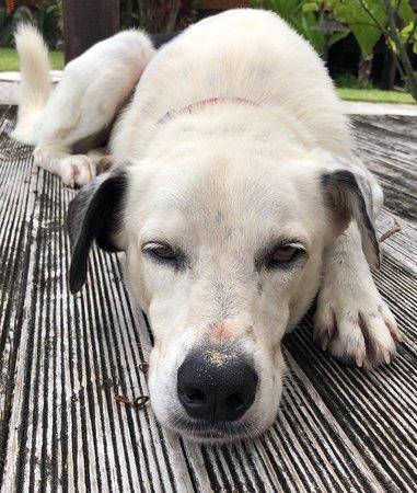 Arorangi, Cook Islands: Magic the amazing dog! Show him some love :)