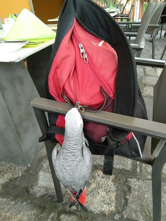 Terre Rouge: Pet Parrot at the restaurant.