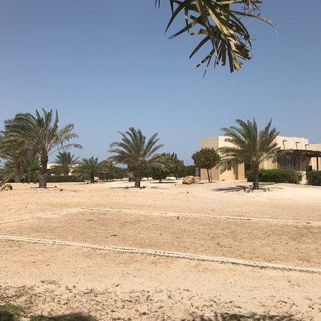 Sir Bani Yas Island, United Arab Emirates: photo6.jpg