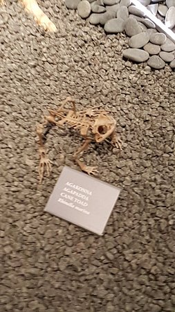 Luonnontieteellinen museo: 20180411_100416_large.jpg