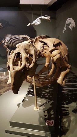 Luonnontieteellinen museo: 20180411_100112_large.jpg
