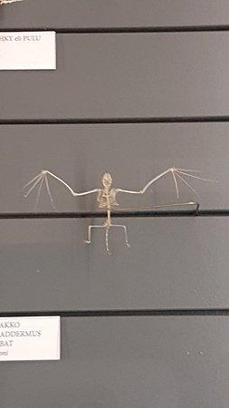 Luonnontieteellinen museo: 20180411_095951_large.jpg