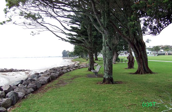 Tauranga, Nueva Zelanda: Seats under the trees