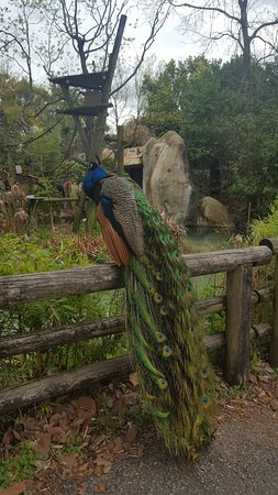 Audubon Zoo: I was greeted by this beauty