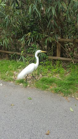 Audubon Zoo: fellow visitor