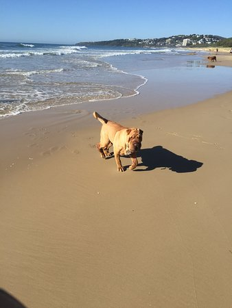 Marcoola, Australia: Yogi enjoying Stumer Creek off leash beach
