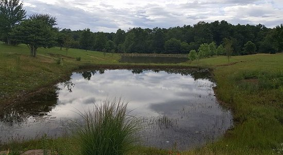 Spencer, TN: Stocked fishing ponds