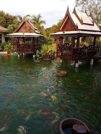Khun Han, Thailand: 20180411_171527_large.jpg