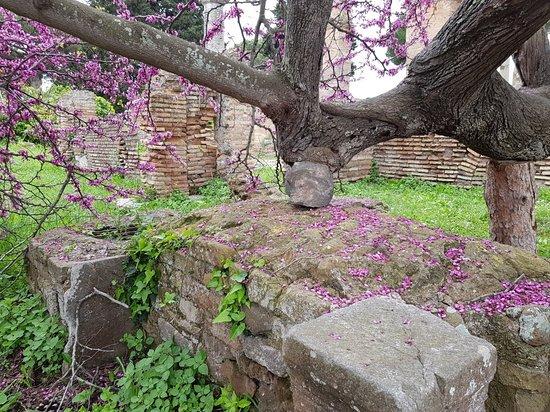 Ostia Antica, Italia: 20180414_151908_large.jpg