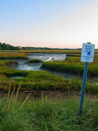 Rachel Carson National Wildlife Refuge: A tidal marsh on the refuge