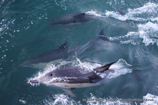 Kleinbaai, South Africa: photo4.jpg