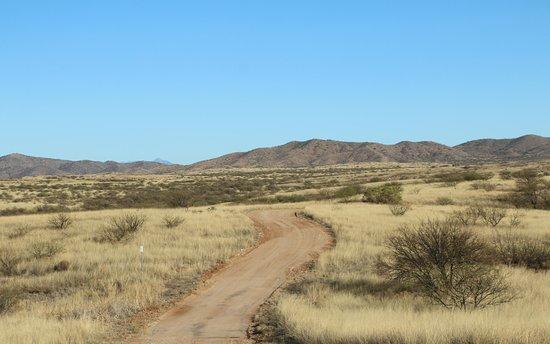 Arivaca, AZ: Pronghorn Loop Drive