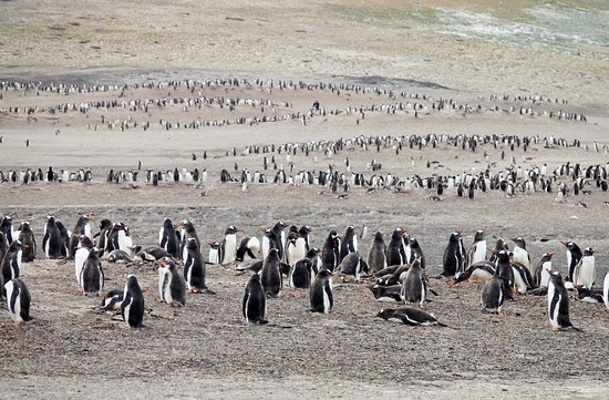 West Falkland, Falkland Islands: Saunders Island
