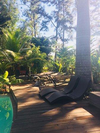 Bilde fra Monkey Lodge Panama