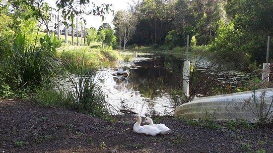 Yandina, Australia: Hidden Valley