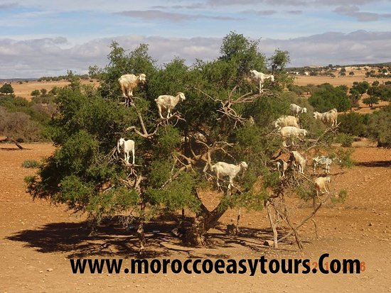 Morocco Easy Tours