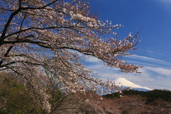 Iwamotoyama Park