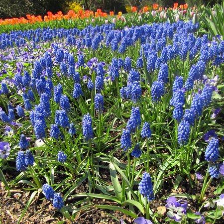 Kennett Square, PA: Longwood Gardens