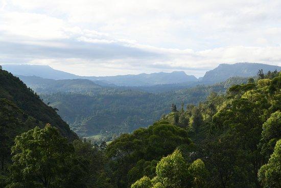 Ambewela, Sri Lanka: View from the garden