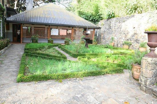 Ambewela, Sri Lanka: Vegetable garden with herbs