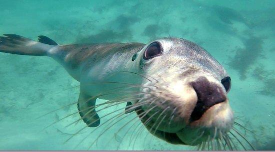 Jurien Bay Oceanic Experience