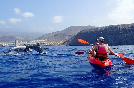 Kayak con i delfini a Tenerife