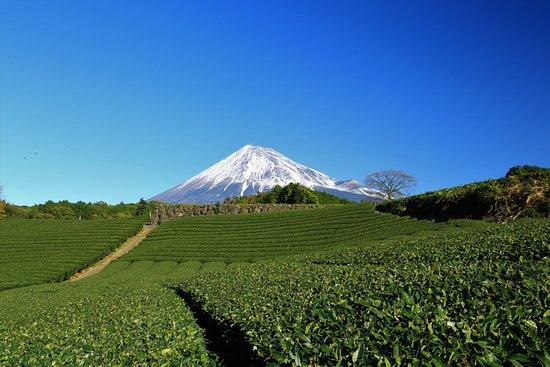 富士市照片