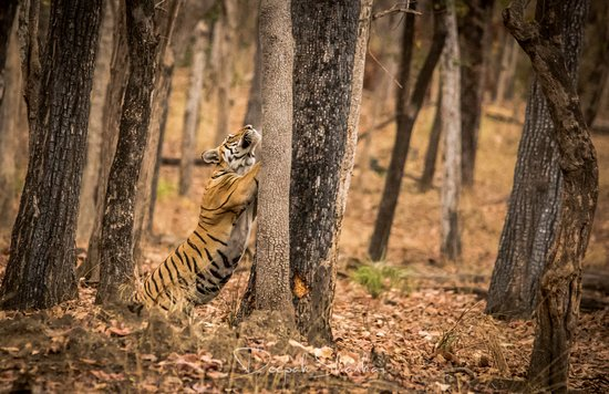 Pench National Park照片