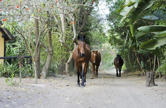 Hluhluwe, Sudáfrica: Guided horse safaris depart from the camp