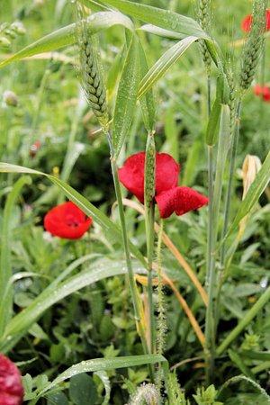Odiaxere, البرتغال: Wildflowers galore