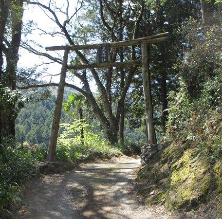 Ono Sakura Nobutai