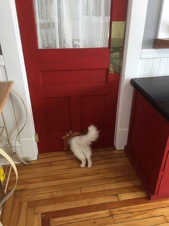 Bocabec, Canada: Bowie has an escape hatch!
