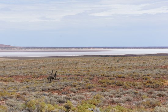 Kingoonya, Australië: Vom Lookout am Stuart Highway - Emus