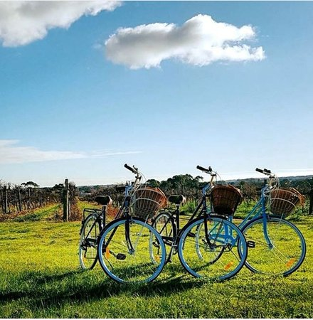 McLaren Vale, Australie : McLaren Vintage Bike Hire - Explore the McLaren wine region at your own pace!