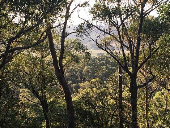 Sarsfield, Australia: a canyon of eucalypt.
