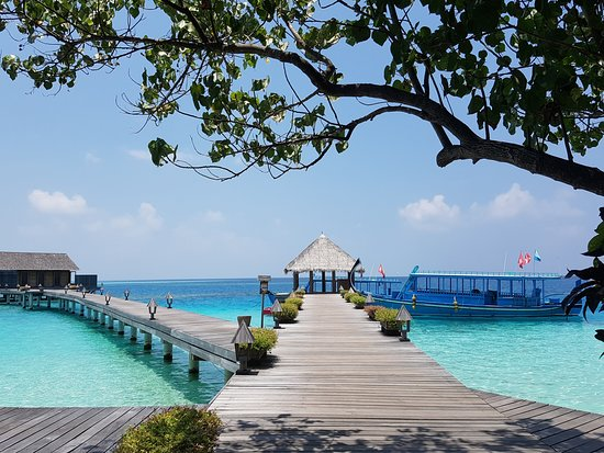 Gangehi Island Resort: The view from reception