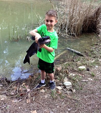 Beavers Bend Log Cabins: Guest caught huge catfish in the stocked fishing pond