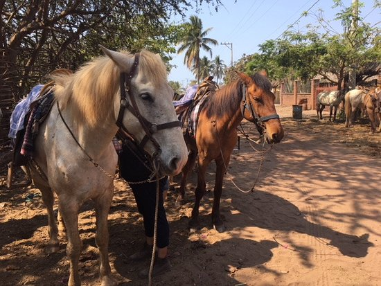 Isla de la Piedra, México: Our rides for the day, El Diablo and Tornado (I kid, I kid....)