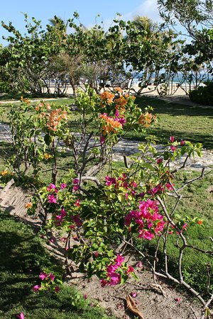 Labadee Beautiful Flowers Near Ocean Beach Hammocks In The Shade This Area