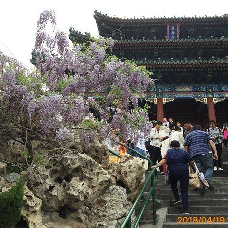 Jingshan Park (Jingshan Gongyuan): photo7.jpg