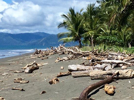 Bilde fra Playa Zancudo